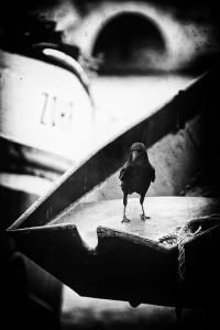 452 - photographie noir et blanc- Paris pont de la Tournelle, photographe, Serge Decoster